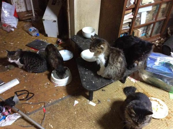 「多頭飼育崩壊」が発生し、劣悪な環境で暮らすネコたち(公益社団法人「日本動物福祉協会」提供)