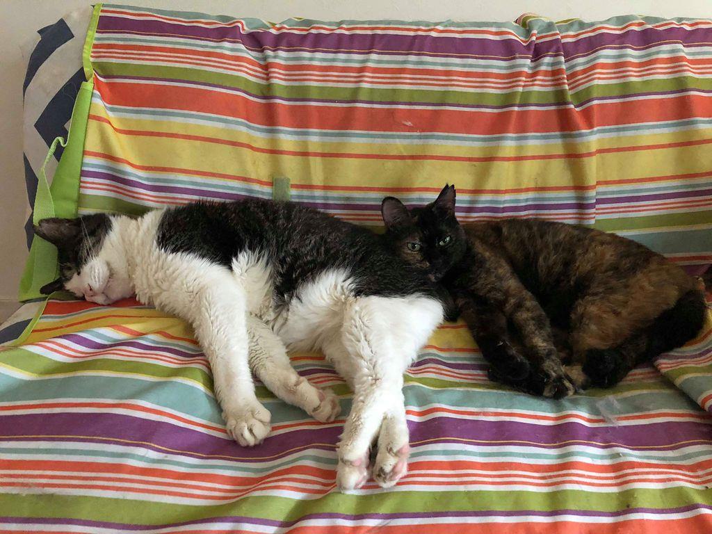 千代田区で保護された後、家庭に迎えられて幸せに暮らす猫たち(「ちよだニャンとなる会」提供)