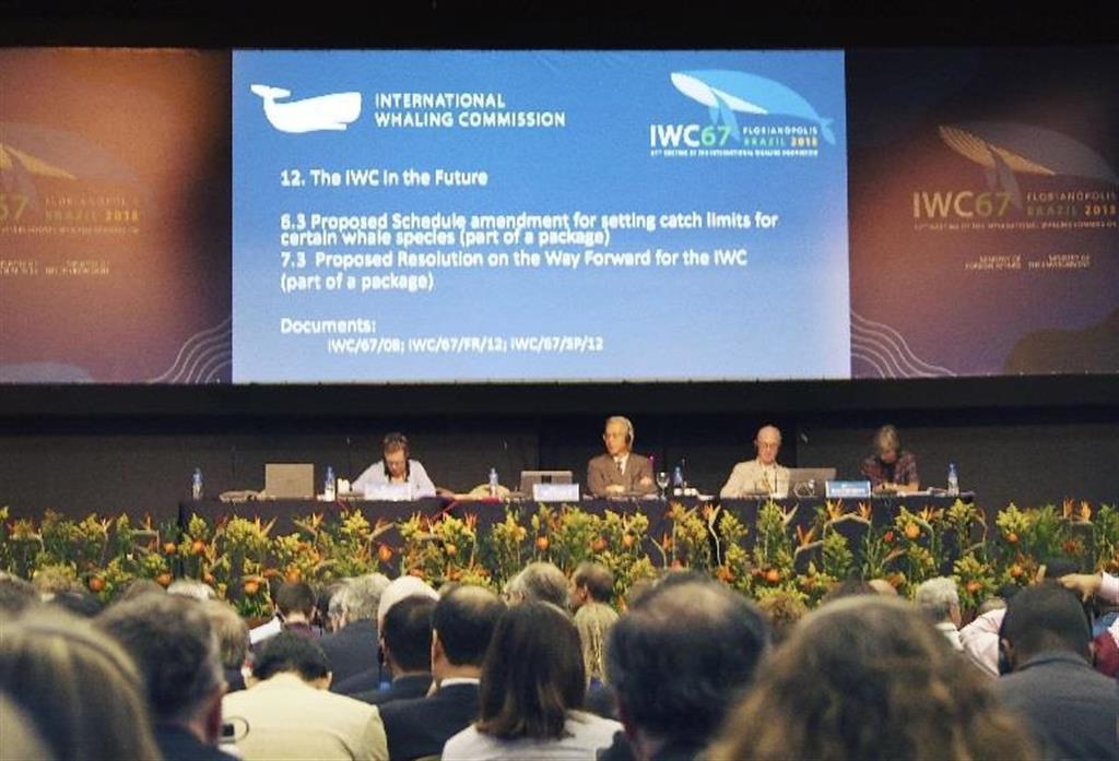 商業捕鯨の再開を目指した日本の提案が否決された国際捕鯨委員会(IWC)総会=2018年9月、ブラジル・フロリアノポリス(共同)