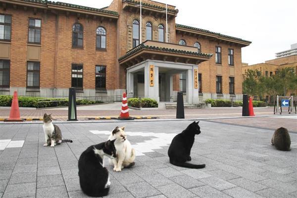 県庁敷地内の議会前でくつろぐ猫たち。車も通る場所だが…=10月10日(外崎晃彦撮影)